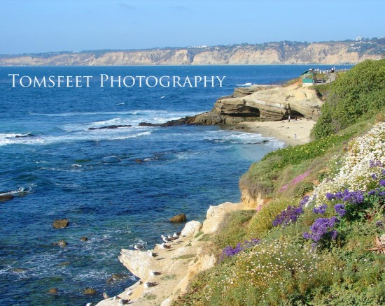 La Jolla coastline image by Tom Willis, a print is one of our weekly raffle prizes!